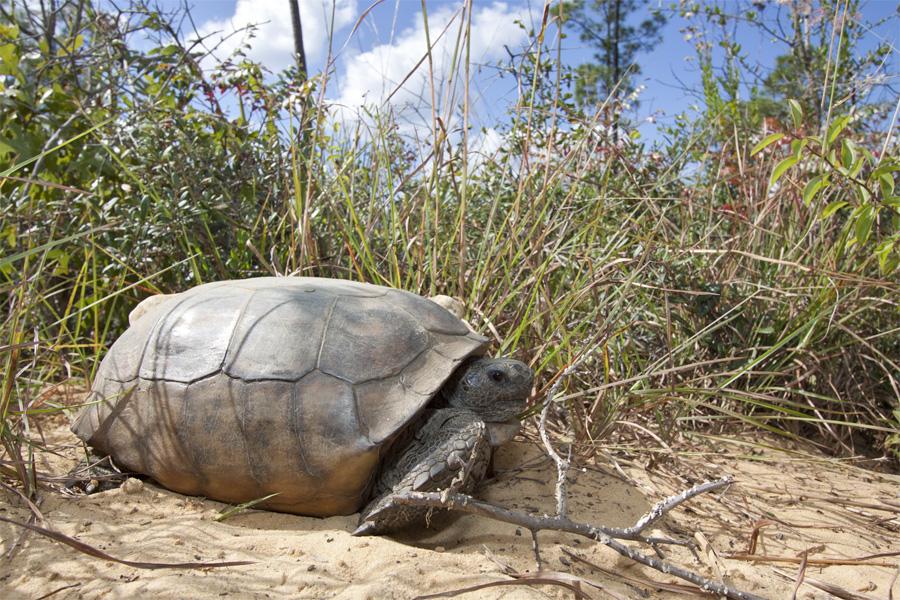 Tortoise Tracking (1/6)