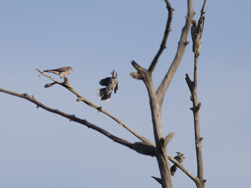 Bird Battle! (2/6)
