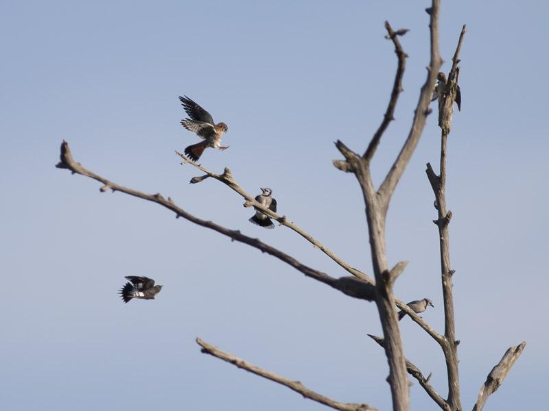 Bird Battle! (3/6)