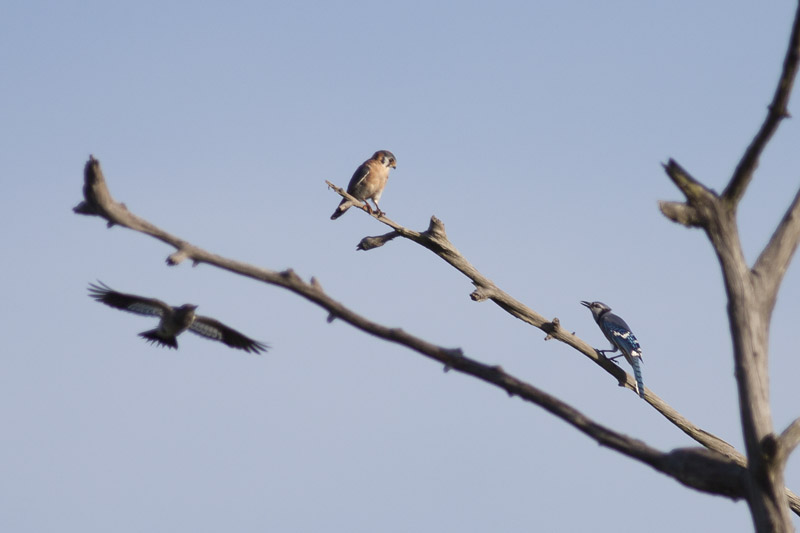 Bird Battle! (4/6)