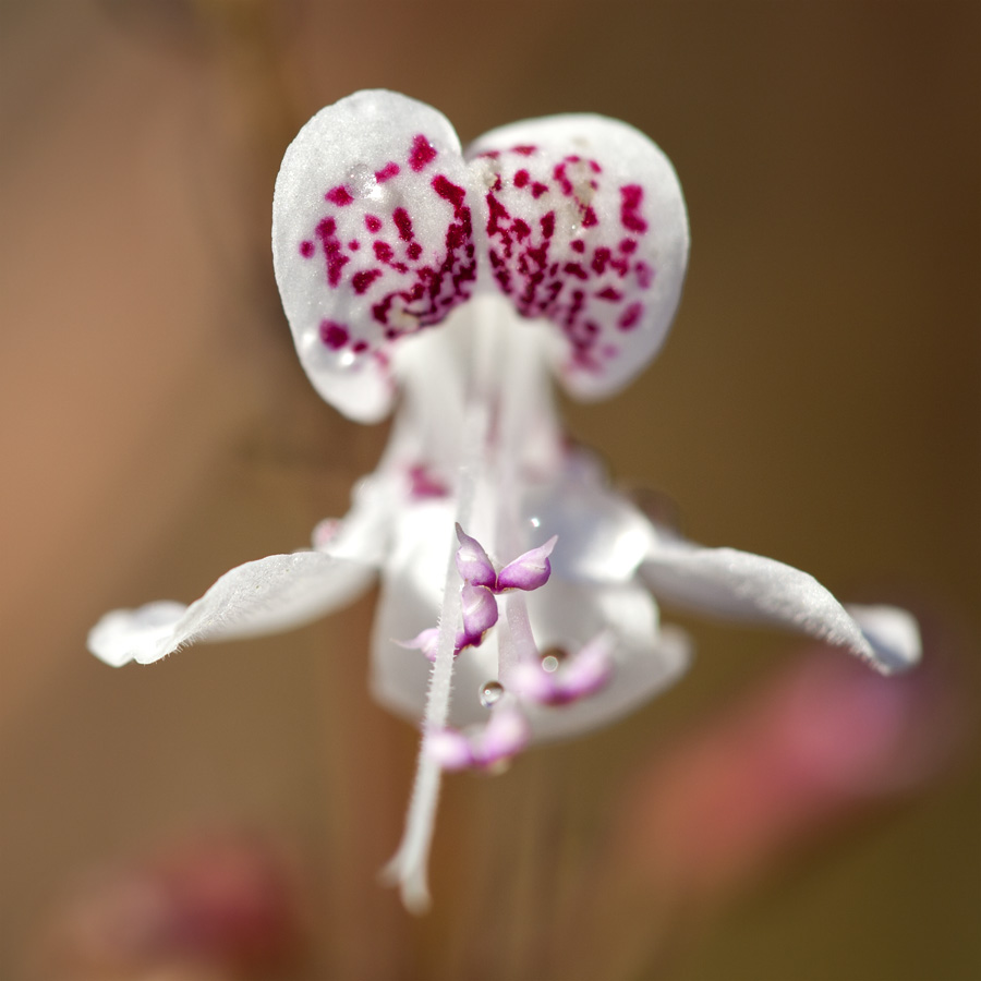 A Rare and Amazing Flower (1/3)