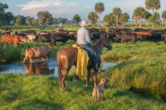 Photo1_Cows