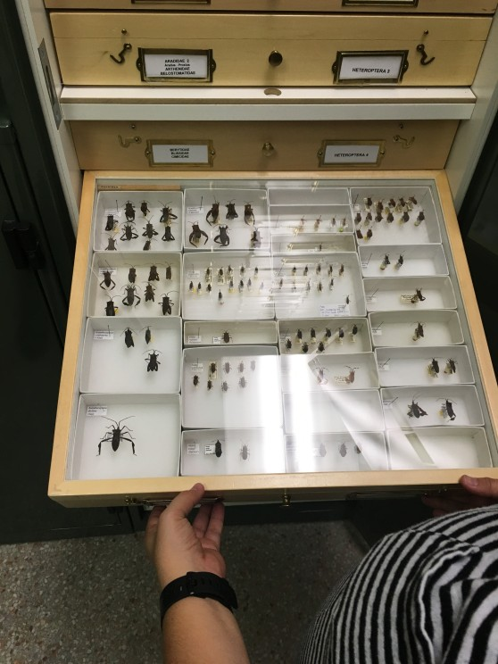 Insect collection2