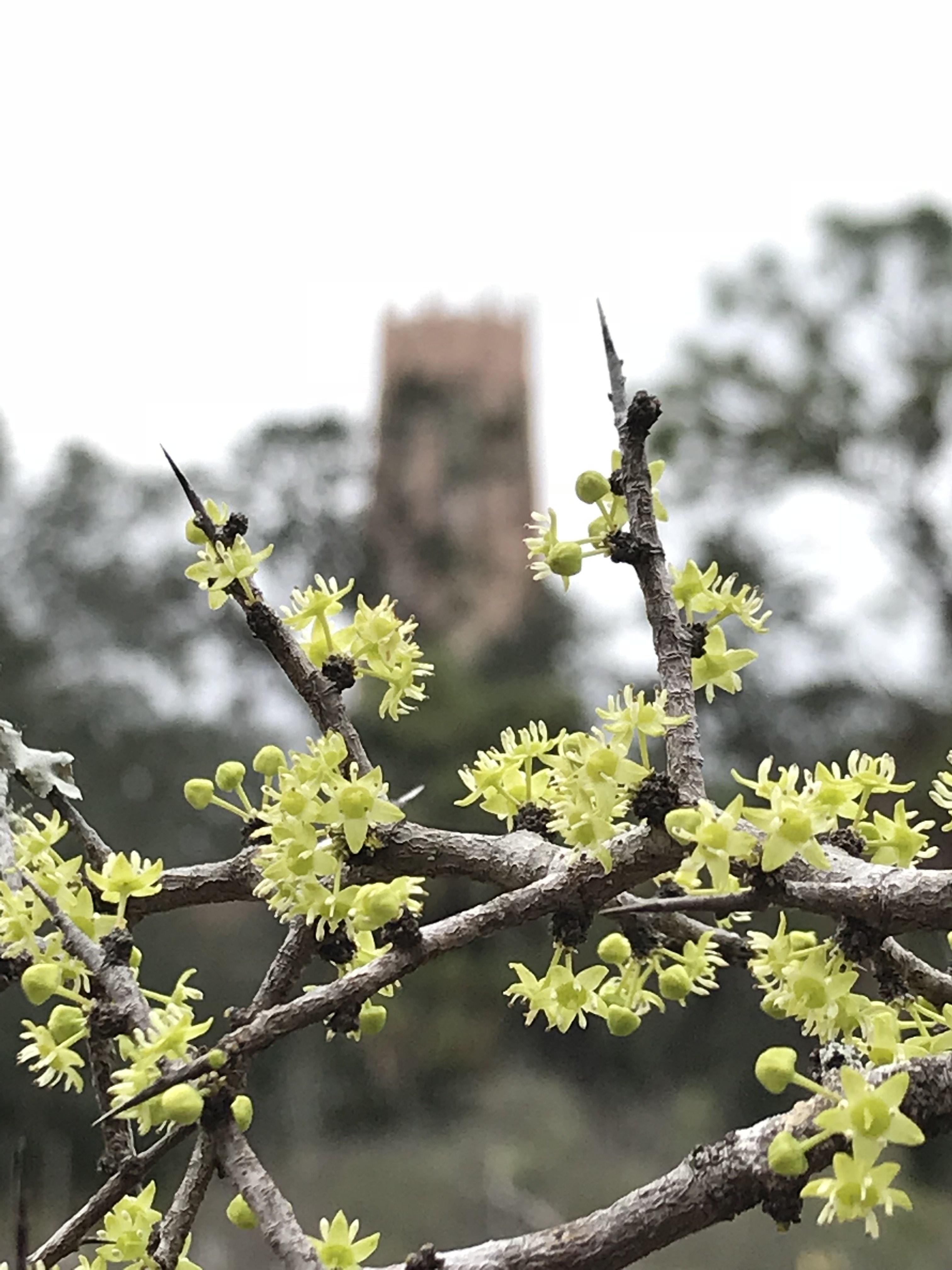 Week105Photo1_ZIZCEL flowers w tower Jan2018