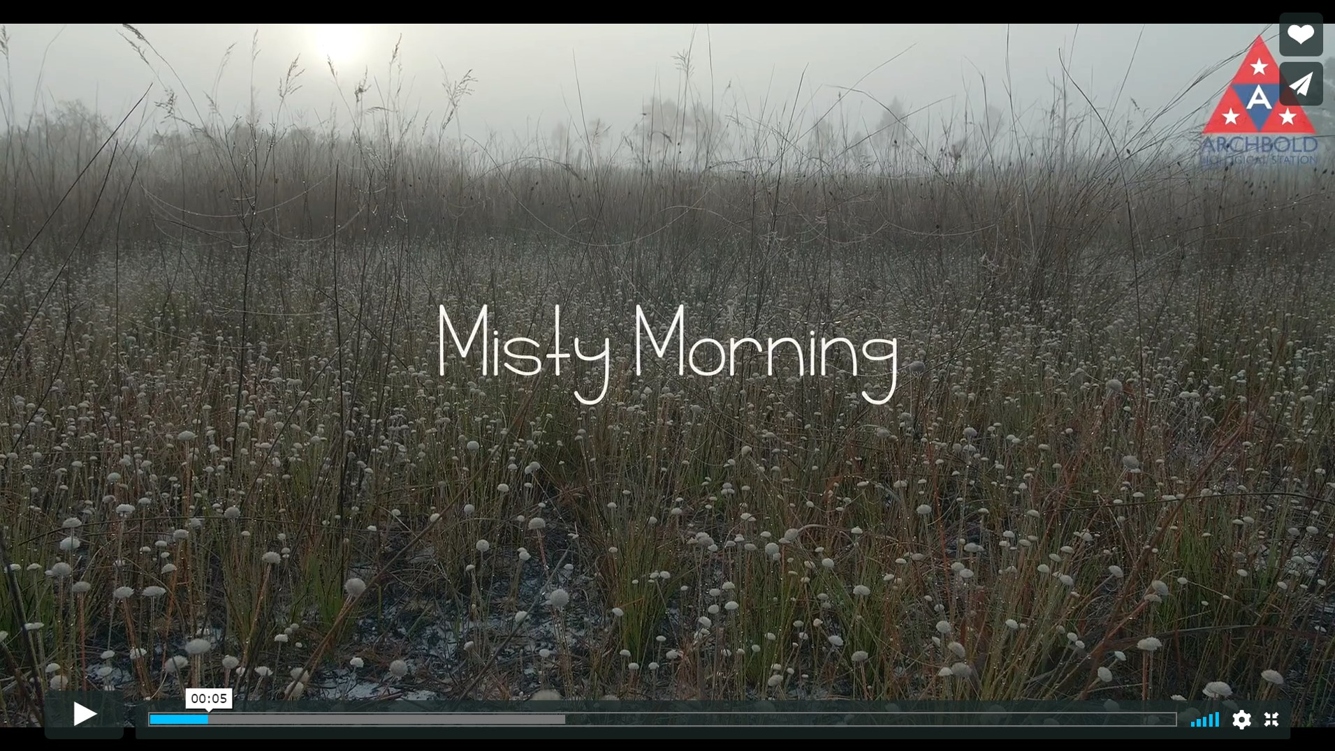 MistyMorning_screenshot (1)